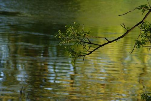 Focus-Branch
