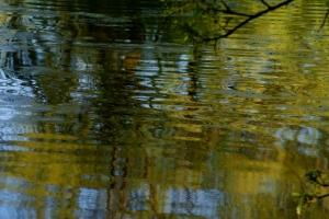 Focus-Water